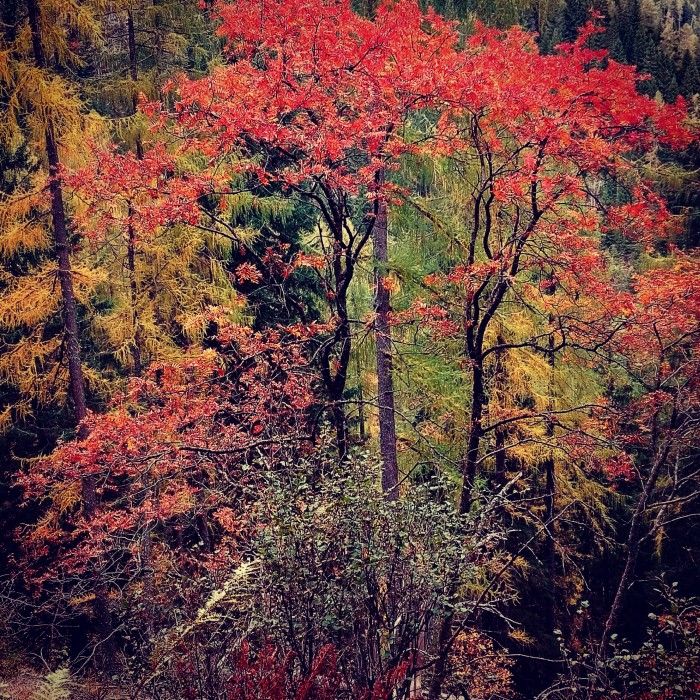 La comunicazione degli alberi