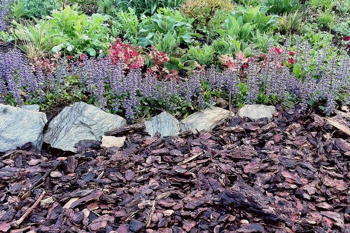 Piante Perenni Per Aiuole la primavera e le perenni | e-gardening